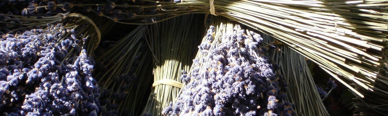 lavender-4139_1920